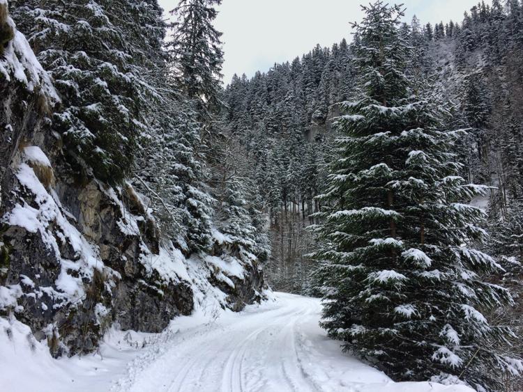 La piste forestière qui mène au hameau des Nants, Virée Verticale